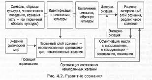 Сознание как высшая ступень развития психики pro psixology ru Развитие сознания
