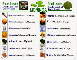 Girlsaffair Health Benefits Of Morninga Plant Moringa