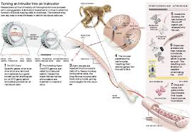 gene therapy passes important test in monkeys