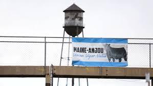 American Maine Anjou Association Platte City Mo