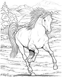 Small Picture 161 best Horse drawings images on Pinterest Coloring books