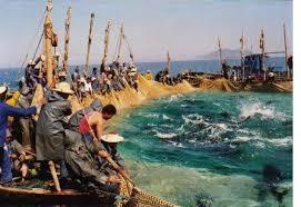 Ô ! Capitaine des mers (Raïs Lebhar) | Fiche Films