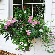 Best Plants For Shade Container GardeningContainer Garden Ideas For Shade