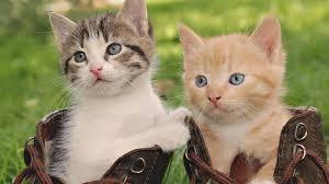 cute baby cats wallpaper hd resolution wallpaper