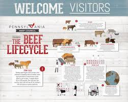 Steer Feeding Chart Beef Lifecycle
