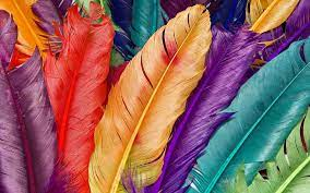 colored feathers wide cute love images