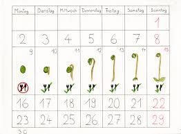Mung Bean Sprout Interaction Basics