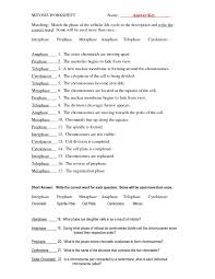 Cell Division The Cell Cycle Mitosis And Meiosis Worksheets Answer ...