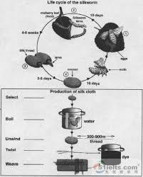 IELTS Report Hot Air Balloon Process Sample Answer     Private      Essay topics  The diagram below shows two different processes for  manufacturing black tea  Summarise the information by selecting and  reporting the main