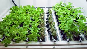 hydroponic herb garden. All You Need To Do Is Feed It Some Organic Plant Food Once A Week, And The Dishwasher-sized Appliance Takes Care Of Everything Else. Hydroponic Herb Garden