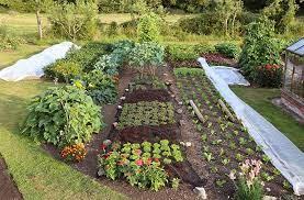 no dig gardening charles dowding