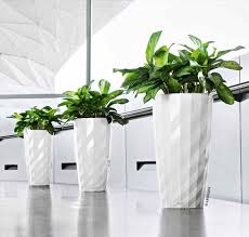 Tall Indoor Plants House Plants Midcentury Modern Interior With .
