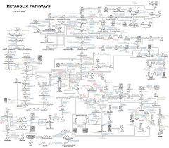 Iubmb Nicholson Metabolic Pathways Chart Metabolism Wikiwand