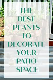 and it is really awesome that the plants and flowers are providing you with an amazing decoration as well