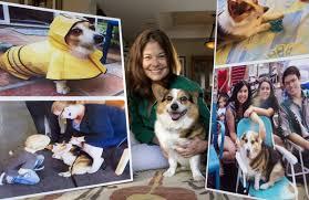 Why it cost a Huntington Beach couple $20K to get a cute corgi off Orange  County's vicious-dog list – Orange County Register