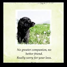 sympathy card pet pet sympathy card messages simple sympathy
