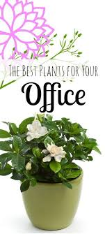 office cubicle plants. 25 Best Ideas About Office Plants On Pinterest For Photo Details - These Gallerie We Cubicle