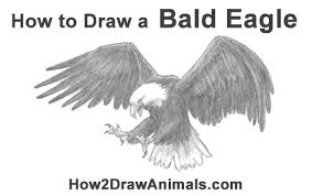 How To Draw A Bald Eagle Flying Hunting Video Step By