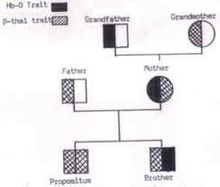 Pedigree Chart Explanation Fig 12 A Classical Pedigree Chart Of A Beta Thalassemia