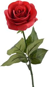 A number of species are cultivated as ornamentals, and some are the source of attar of roses used in perfumes. Amazon Com Louis Garden 17 Artificial Silk Flowers Fake Rose 1 Red Home Kitchen