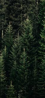 green forest with pine trees iPhone 11 ...