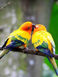 Love Bird Wallpaper for Android - APK ...