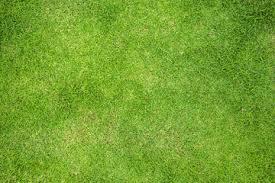 grass field texture. Grass Field Top View Texture