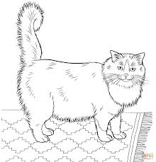 Small Picture Cat Coloring Pages All Coloring Pages