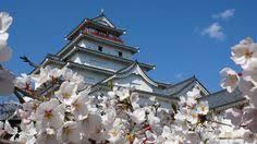 tsurugajyo castle cherry blossom