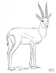 Small Picture Antelopes coloring pages Free Coloring Pages
