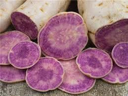 purple sweet potato plant. Beautiful Purple Okinawan Purple Sweet Potato For Plant