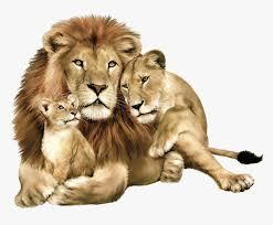 lion png image free image