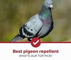 top 5 best pigeon repellents 2021
