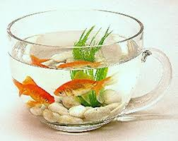 Decorative Fish Bowls Decorative Teacup Glass Fish Bowl 6