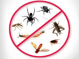 نتيجة بحث الصور عن مكافحة حشرات بالرياض