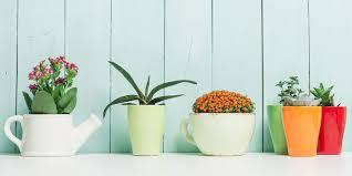 house plants. Indoor Plants House