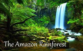 amazon rainforest. Simple Rainforest YouTube Premium Intended Amazon Rainforest E