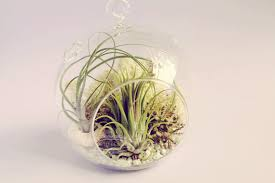 Air Plant Globes Images - Reverse Search