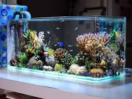 Fish Tank Accessories And Decorations Freshwater Fish Tank Decor Harper Noel Homes The Visualization 87