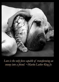 Martin Luther King Quotes On Love Enchanting 48 Famous Martin Luther King Quotes With Images Good Morning Quote