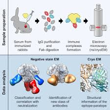 polyclonal antibodies electron microscopy based epitope mapping defines