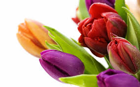 pictures of beautiful flowers wallpapers 56 images