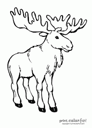 Small Picture Moose coloring page Print Color Fun