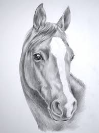 images for wild horse drawings in pencil