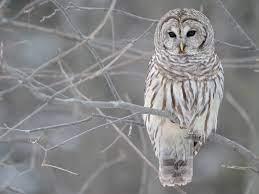 45+] Winter Owl Desktop Wallpaper on ...
