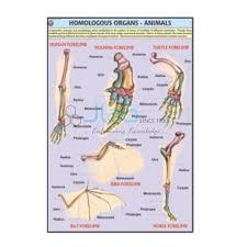 Homologous Organs Animals Chart