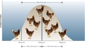 Growth Of A Chicken Chart Weekly Chicken Growth Chart Farm Animal Growth Chart Hen And