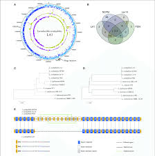 A Venn Diagram Tracks Which Of The Following A Circular Map Of The Lactobacillus Acidophilus La1 Genome