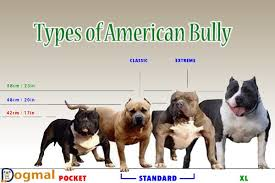 Types Of Pitbulls Chart American Bully Growth Chart Lovely Misconception Of The