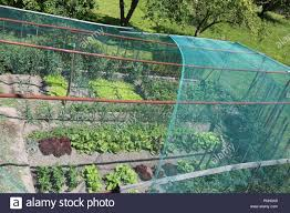 wide vegetable garden with lettuce and radicchio with a hail protection net